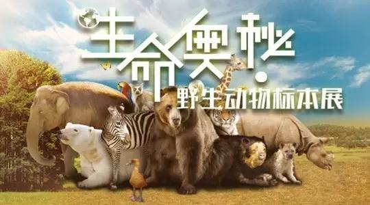 野生动物标本展